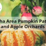 Omaha Area Pumpkin Patches and Apple Orchards