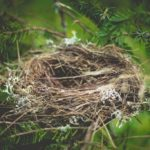 Empty Nest Part 1: My New Found Freedom Is Not What I Imagined